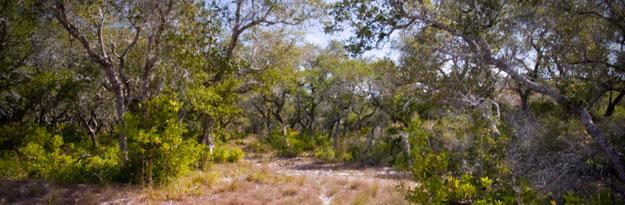 Porost tvrdé dřeviny Mesquite