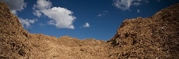 Pile of Mesquite hard wood chips